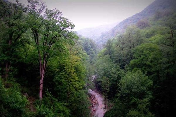 بیشترین لکه های جنگل های هیرکانی برای ثبت در یونسکو در استان مازندران قرار گرفته است
