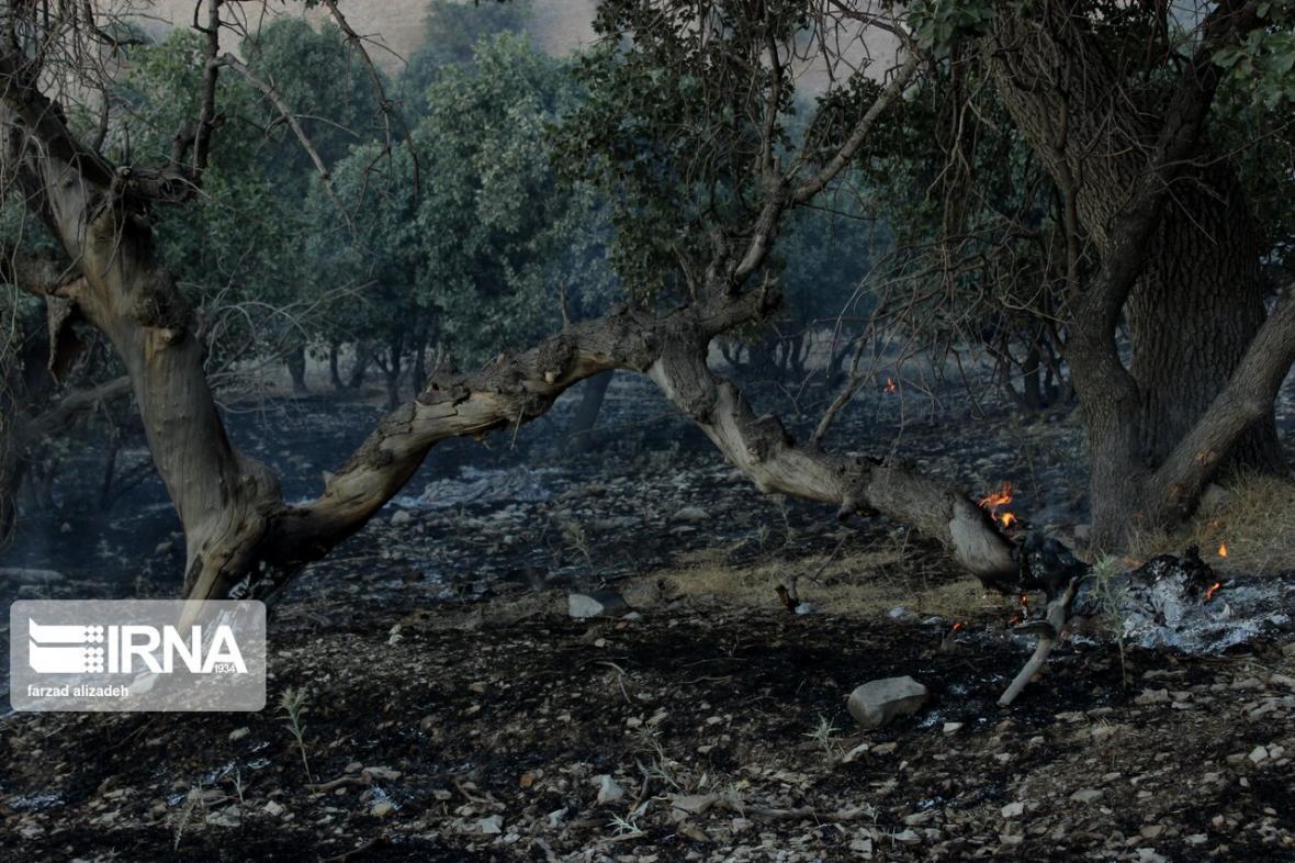 خبرنگاران آتش سوزی دره ارغوان ایلام مهار شد