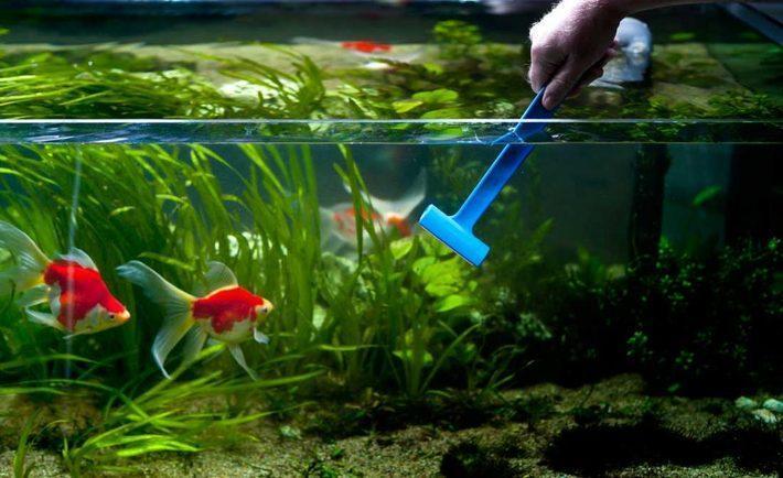 بهترین و حرفه ای ترین راه برای تمیز کردن آب آکواریوم
