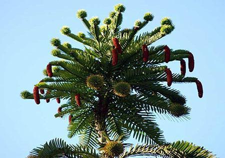 عجیب ترین درختان در گوشه و کنار دنیا