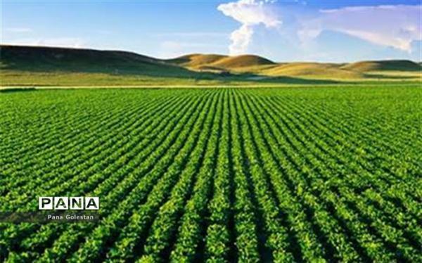 81 هزار میلیارد طرح ملی کشاورزی افتتاح می گردد