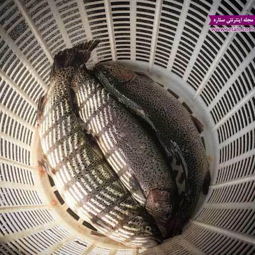 طرز تهیه ماهی شکم پر شمالی (پخت ماهی قزل آلا در فر)