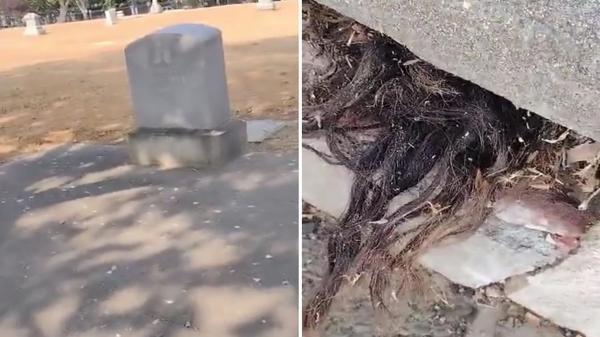 برخورد ترسناک با مو هایی که از قبری قدیمی بیرون زده اند